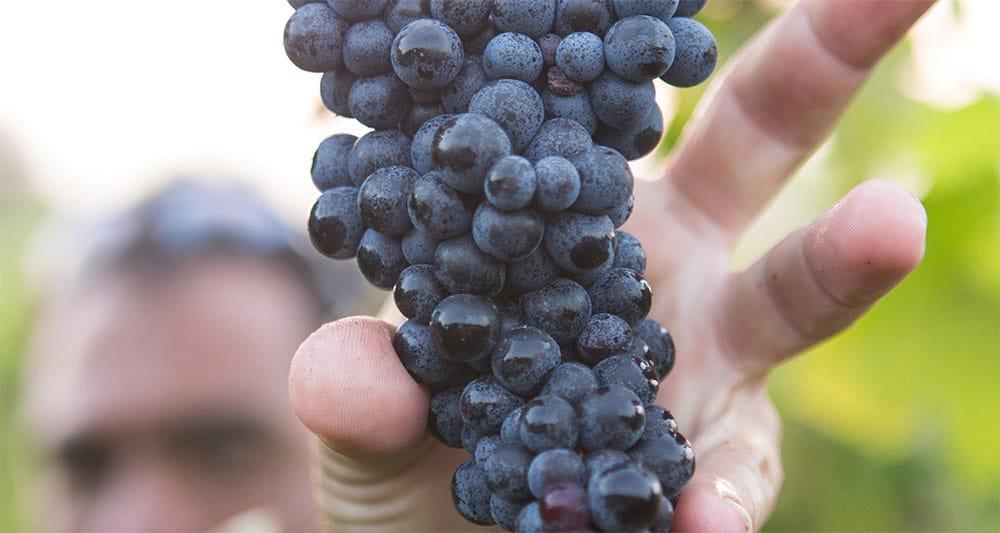 SA 2020 wine vintage