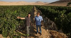 The future of wine: very, very dry
