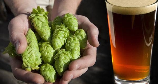 It's beer, but not as we know it: scientists dispense with need for hops