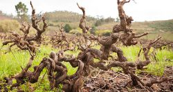 Four SA wine trends to look out for in 2020